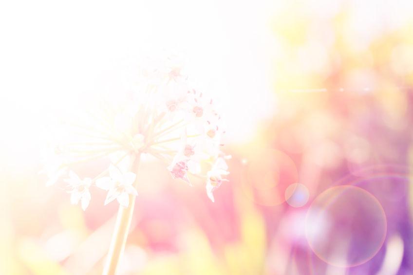 (日本語) Bach Flower