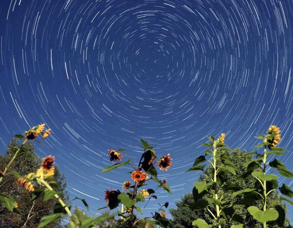 (日本語) 続「星と花」でコロナウイルス・心の対策